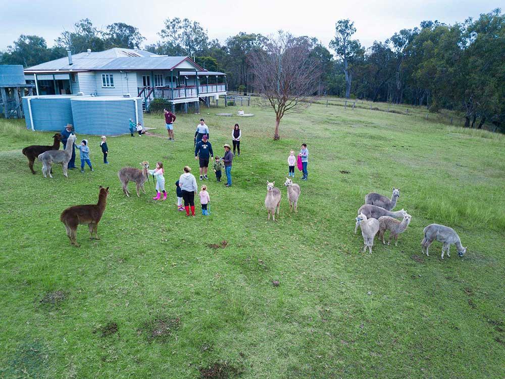 BunyipSprings Farmstay alpaca drone photography