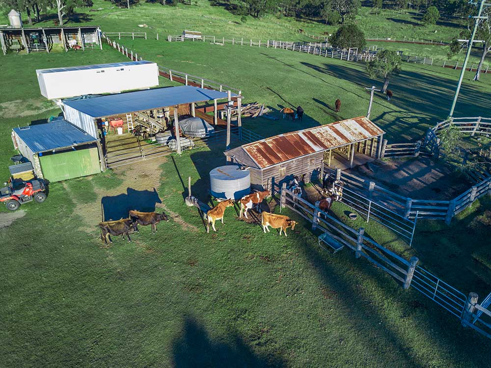 BunyipSprings Farmstay cattle drone photography