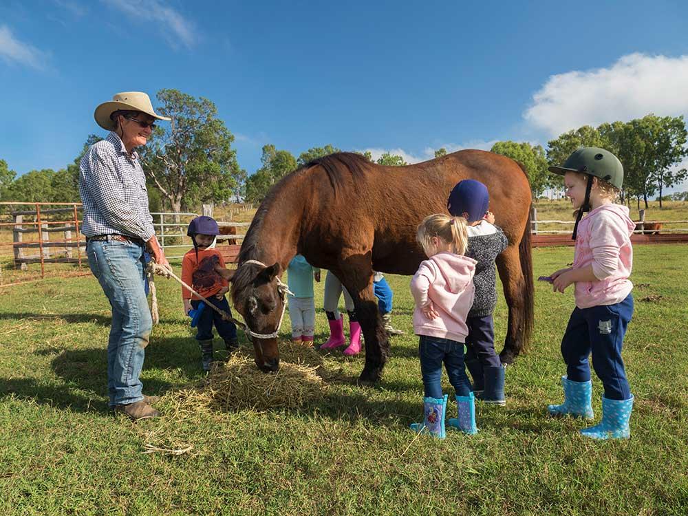 BunyipSprings Farmstay horse photograph