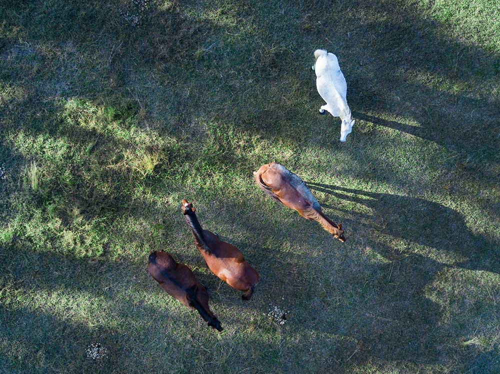 BunyipSprings Farmstay horses drone-photography