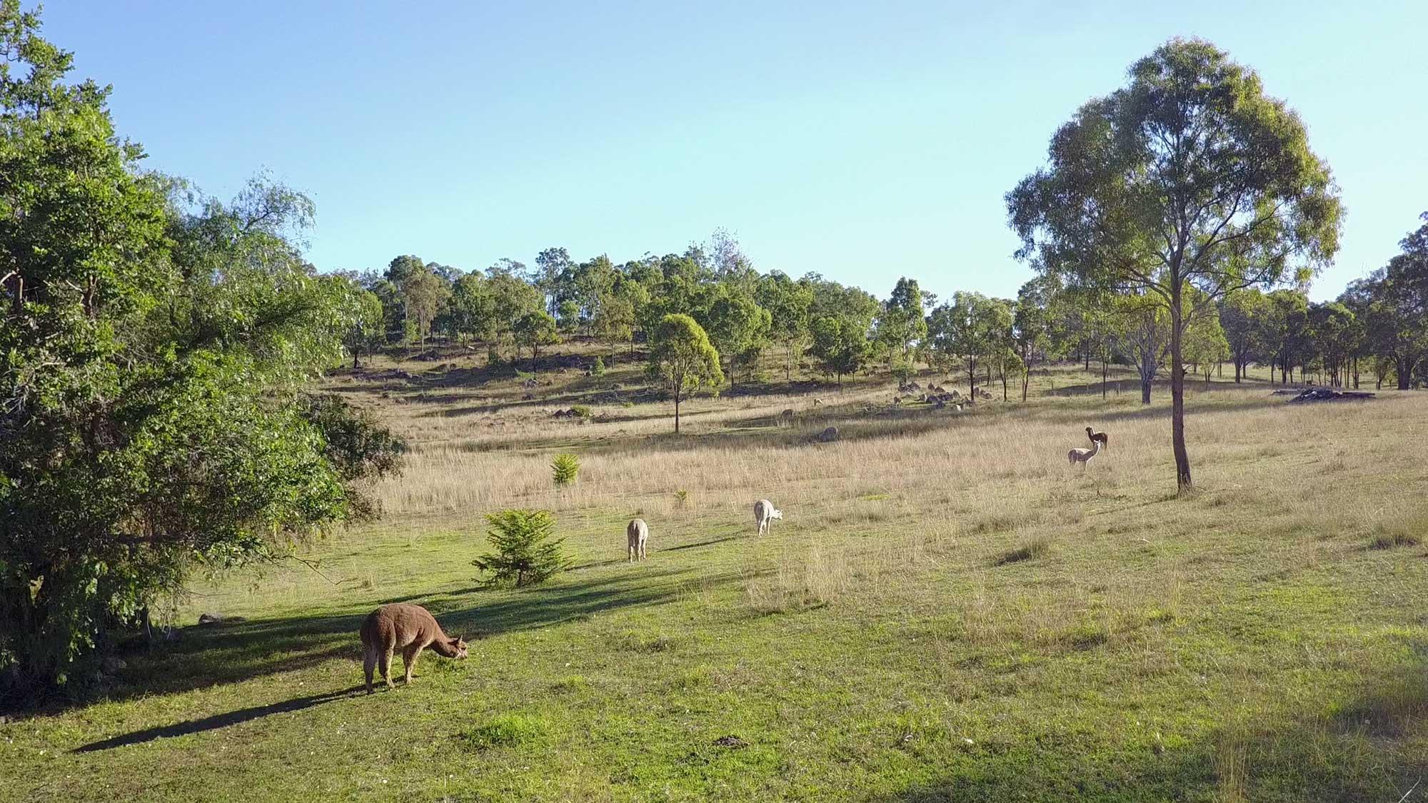 BunyipSprings FarmStay 2.7K Video Drone Photographs farm Alpacas