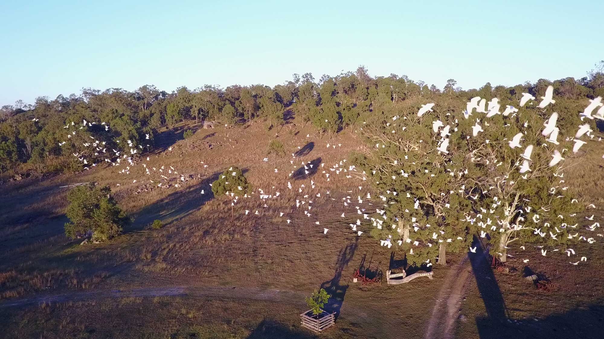BunyipSprings FarmStay Early morning drone photography native birds