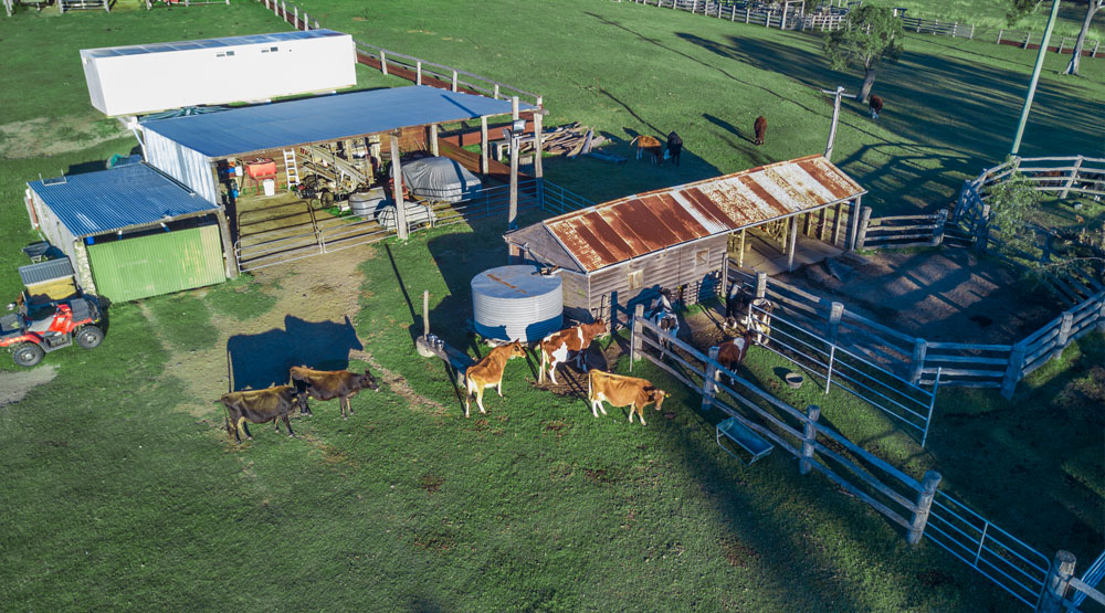 Drone photography used for capturing cows at BunyipSprings FarmStay